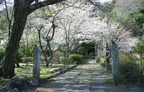 修善寺温泉「奥の院春の静寂」のご案内