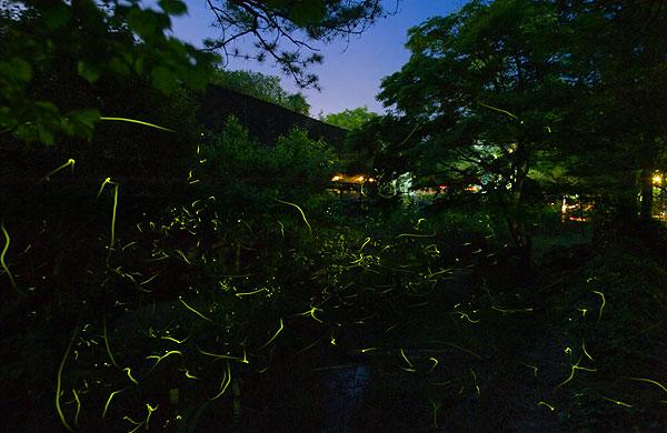 修善寺ほたるの夕べ